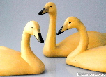 Whooper swans - swan carvings
